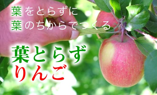 葉をとらずに葉のちからでつくる、葉とらずりんご